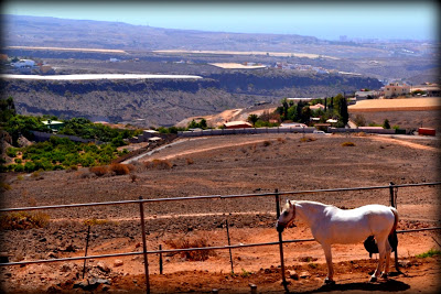 En tur på hesteryg – Gran Canaria – last part